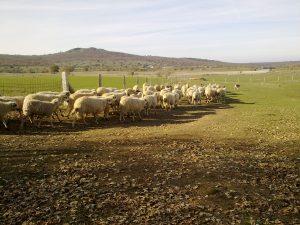 Visita nuestra ganadería