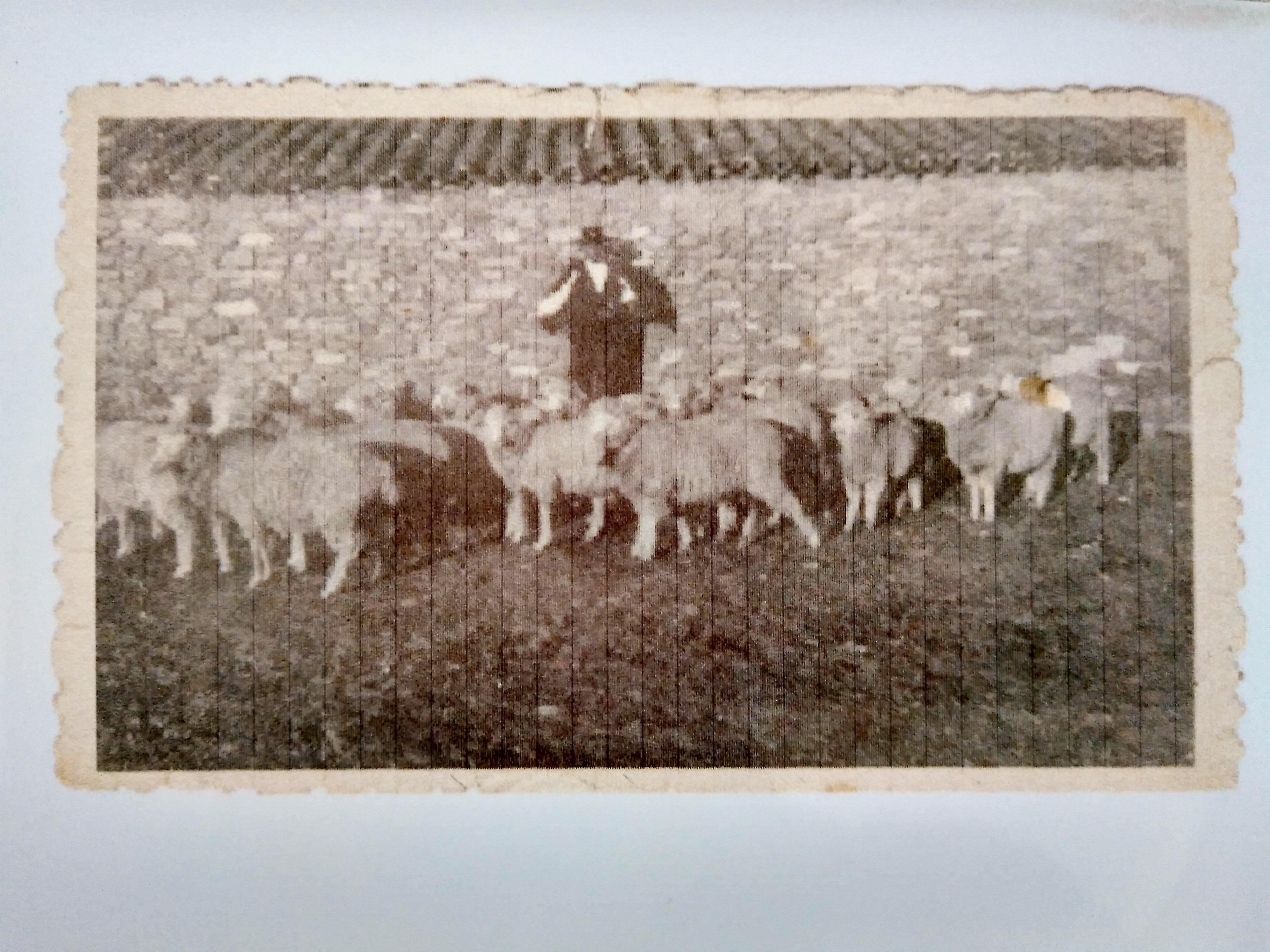 Marcelino y sus ovejas