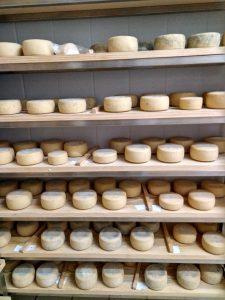 Quesos de cabra en cámara de maduración de la quesería